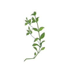 Green Wild Plant Hand Drawn Detailed vector image