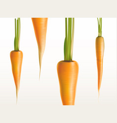3d realistic carrots - orange vegetables vector image