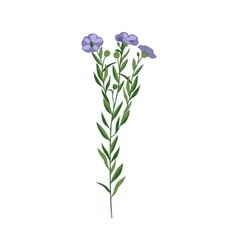 Flax Wild Flower Hand Drawn Detailed vector