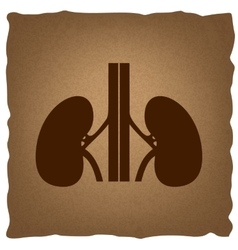Human kidneys sign vector image
