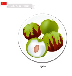 Jujube or Chinese Date A Popular Fruits in China vector
