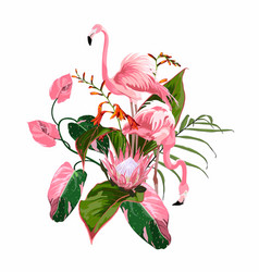 paradise pink flamingo birds couple vector image