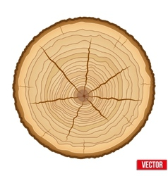 Cross section of tree trunk vector image