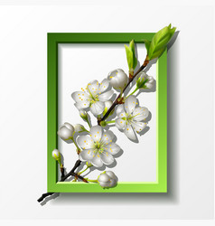 Branch of white cherry flowers in green frame vector