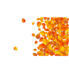 autumn advertising banner with half leaves vector image