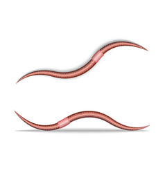 Crawling earthworm isolated on white 3d realistic vector