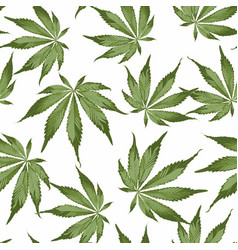 seamless pattern cannabis plant vector image