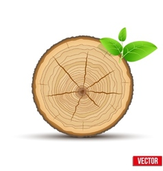 Wood cross section tree trunk with green leaves vector