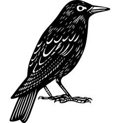 Blackbird vector image vector image