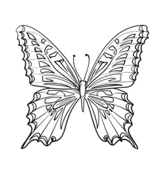 Flying butterfy card vector