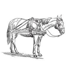 Horse in harness vector