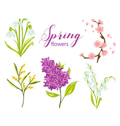 Spring flower set with lilac lily snowdrop vector