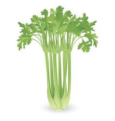 bunch of celery vector image
