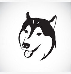 dog siberian husky on white background pet vector image