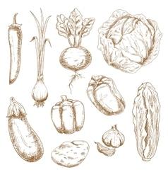 Sketch icons of farm and garden vegetables vector