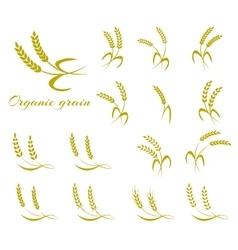 Wheat ear symbols for logo design vector image vector image