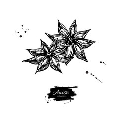 anise star drawing hand drawn sketch vector image