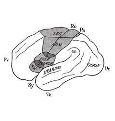 Cerebral hemisphere showing localization vector