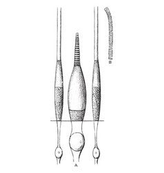 Cones and rods of retina vintage vector