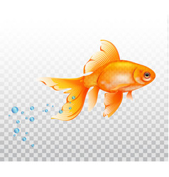 floating fish underwatergoldfish with air bubble vector image