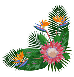 Tropical bouquet corne rcomposition vector