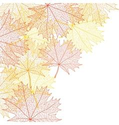 Autumn macro leaf maple background vector