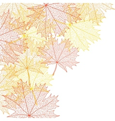 Autumn macro leaf of maple background vector