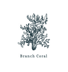 branch coral drawing of sea vector image