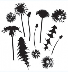 dandelion silhouettes vector image