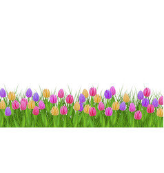 Spring floral border with colorful tulips on fresh vector