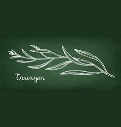 tarragon chalk sketch vector image