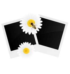 Chamomile flower and photo frame vector image vector image