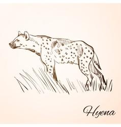 doodle hyena vector image vector image