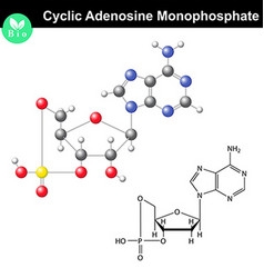 Cyclic adenosine monophosphate chemical structure vector image vector image