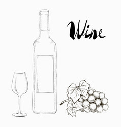 hand drawn wine glass and bottle vector image