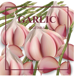 garlic card background realistic detailed vector image