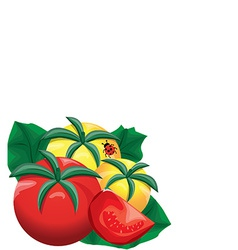 Yellow and red fresh tomatoes vector image