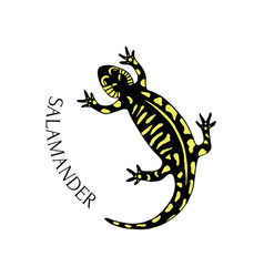 hand drawn salamander in black and yellow color vector image