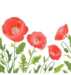 Poppies bouquet seamless border composition vector image vector image