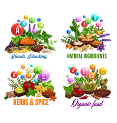 Herbs and spices organic cooking ingredients shop vector
