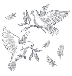 Doves or pigeons with olive branch or twig in beak vector