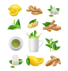 Ginger root and tea eating plants healthy vector