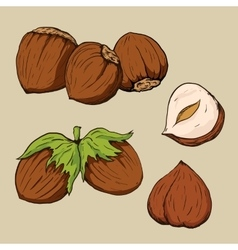 Hazelnuts in hand-drawn style vector image
