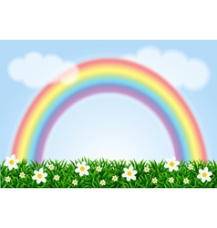 Landscape with a rainbow and camomiles vector image