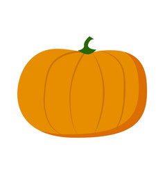 pumpkin isolated at white background sweet eco vector image