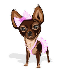 sweet little dog in pink clothes vector image