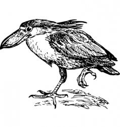 boatbilled heron vector image vector image
