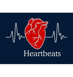 Human heart with white heartbeats cardiogram vector image