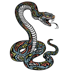 a poisonous snake vector image