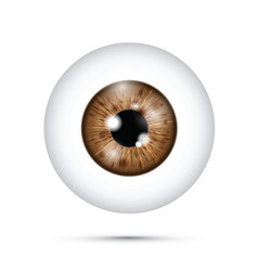 Brown realistic eyeball vector